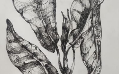 Folliage pencil shadding