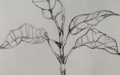 Folliage line drawing